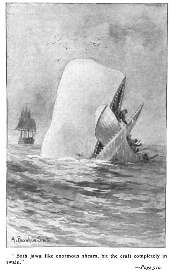 Illustration von Moby Dick.